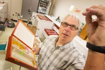 Scott Gardner examines parasite samples in the Harold W. Manter Laboratory of Parasitology at the University of Nebraska-Lincoln -  Craig Chandler/University Communications/University of Nebraska-Lincoln